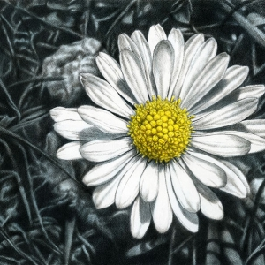 Daisy Japanese sumi ink & acrylic on canvas 50 x100 mm (19¾ x 39½ in) 2009