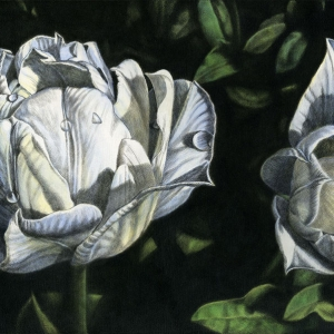 Tulips in Green Japanese sumi ink & acrylic on canvas 50 x100 mm (19¾ x 39½ in) 2009