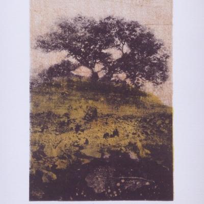 Oak R Payn
